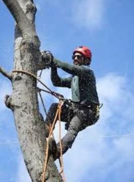 tree trimming bulimba