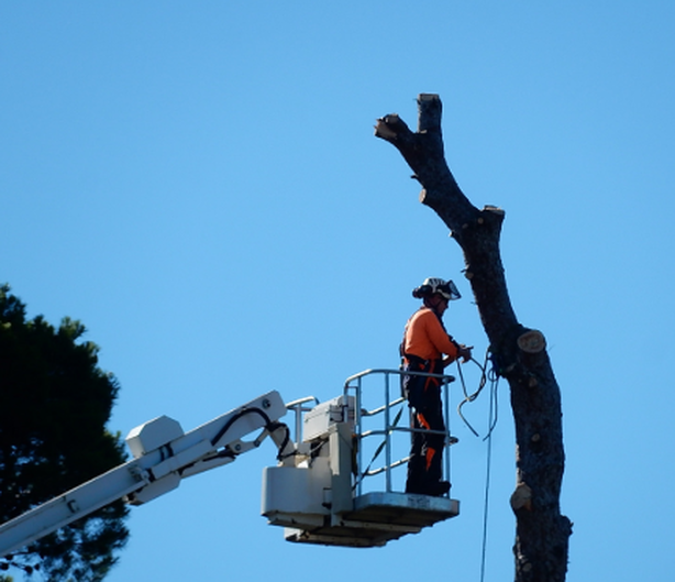 Tree Lopping Coorparoo
