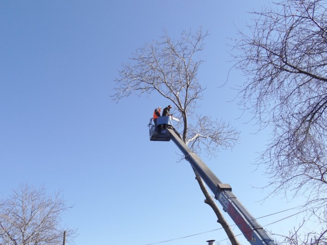 Tree Removal Wishart